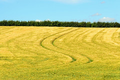 S is for Summer (AndyorDij) Tags: barley fields publicfootpath tracks empingham england rutland uk unitedkingdom 2016 summer