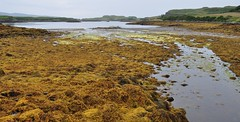 Les algues du Loch Dunvegan, Dunvegan castle, le de Skye, Ross and Cromarty, Highland, Ecosse, Grande-Bretagne, Royaume-Uni. (byb64) Tags: dunvegan dunvegancastle dnbheagain clanmacleod macleod mcleod strath skye isleofskye ledeskye innerhebrides hbrides hbridesintrieures le isle island isla rossandcromarty ross rossshire highland highlands loch ecosse escocia schottland scotland scozia grandebretagne greatbritain grossbritanien granbretana royaumeuni reinounido vereinigtesknigreich ue uk unitedkingdom eu europe europa chteau chteaufort castle castillo castello burg moyenage medioevo middleages edadmedia xve xvie xviie lochdunvegan algues algae alge alga