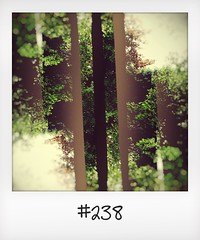 """#DailyPolaroid  of 23-5-16 #238 • <a style=""""font-size:0.8em;"""" href=""""http://www.flickr.com/photos/47939785@N05/28221092865/"""" target=""""_blank"""">View on Flickr</a>"""
