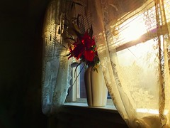Light (DannyiPhonePhotog) Tags: morning family light red summer sun sunlight house color home window glass rose photography living photographer room vase inside windowsill iphone iphone6plus