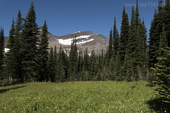 "Meadows with Piegan Mountain • <a style=""font-size:0.8em;"" href=""http://www.flickr.com/photos/63501323@N07/28242425170/"" target=""_blank"">View on Flickr</a>"