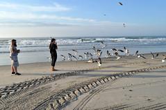 wildwood 2016 (emilysanto) Tags: seagulls wildwood newjersey summer vacation birds morning breakfast sand ocean water sun beach