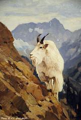 The Cragmaster (detail), Carl Rungius (V. C. Wald) Tags: jacksonhole grandtetonnationalpark wildlifeart jacksonwyoming nationalmuseumofwildlifeart carlrungius thecragmaster