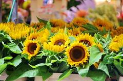 Berlin 2015 - 261 Maybachufer Trkenmarkt (paspog) Tags: berlin maybachufer trkenmarkt allemagne deutschland germany tournesol sunflowers fleurs flowers