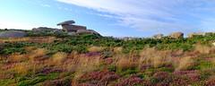 PLOUMANAC'H (claude.lacourarie) Tags: ploumanach breizh bretagne 22700 perrosguirec landes mer rochers granit rose cte heather pink rocks sea coast