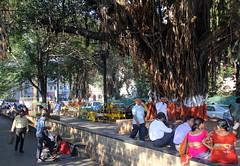 Under the Banyan Tree (paulhami) Tags: bombay mumbai banyantree sidewalk