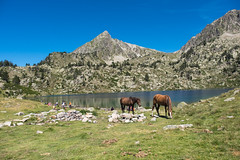 2 chevaux occupent aussi, les lieux et non 2CV (alainlecroquant) Tags: montagne lac pyrnes nouvielle oule bastan infrieur suprieur milieu barrage artigusse parking vache cheveaux refuge refugedebastan