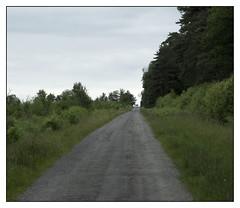 Rennes Forest #3 (Oeil de chat) Tags: fujifilm x20 couleur foret vert nature serie promenade