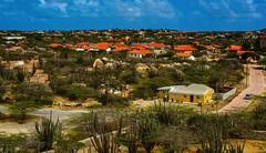 Landscape. Oranjestad, Aruba (ost_jean) Tags: landscape aruba oranjestad caribbean cactus nikon d5200 afs dx nikkor 35mm f18g ostjean