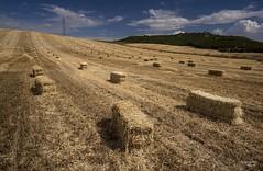 La espera (Anpegom fotografa) Tags: pacas alpacas paja verano dorado villabaez valladolid castillaylen espaa spain