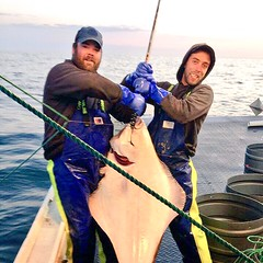 Kyle Ellis doing the business in the Bay of Fundy in New Brunswick, Canada. #Stormline #newbrunswick #fishing #stormlinegear #photocontest