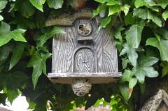 Wasp Nest (kensaiger) Tags: bird nest box wasps