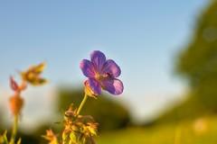 Nature's Beauty... (Julian P_) Tags: nature flower hiking bokeh sunshine air warm summer pink ngc