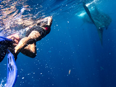 The Chase (spencer_r_allen) Tags: travel mexico island underwater olympus whaleshark tough mx snorkle waterproof islamujeres skindiving tg4 qintanaroo