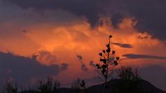 Thunderhead in the northeast lit up by sunset (jimsc) Tags: thunderhead yucca stalk skyscape fierysky skycolors evening skyshow eveningsky skyfire endofday orange july summer monsoon ngc desert sonorandesert arizona tucson catalina pimacounty panasonic lumix fz200 jimsc
