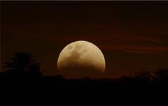 A veces... (anitareal) Tags: luna cielo arbol noche sombras airelibre foto vislumbre paisaje rojo amarillo anamaria nikon