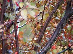 Rain 20140918 (caligula1995) Tags: 2014 plumtree rain