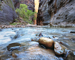 Into the Narrows (claudiaogradyphotography) Tags: utah canyon zion zionnationalpark narrows
