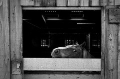 watching (alanhoughton777) Tags: stable horse pony fuji xt1