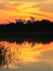 Summer sunset (Antti Tassberg) Tags: 135mm auringonlasku aurinko cloud evening ilta jrvi kes laaksolahti lake lens pilvi pitkjrvi prime reflection silhouette sun sundown sunset twilight espoo uusimaa finland
