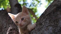 Pequeo len. #gatitos (abdielretiguin) Tags: gatitos gatos mascotas kitty kitten pets cats outdoor tree