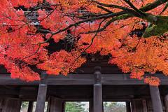 Ninna-ji 8969-Edit (kbaranowski) Tags: 2016krzysztofbaranowski krzysztofbaranowski nihon nippon autumn maple japanesemaple fallfoliage colorful nature beautyinnature garden japanesegarden reflection kyoto temple