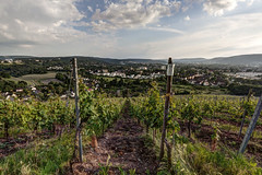 riesling (dadiolli) Tags: trier aussicht petrisberg view weinberg wine hdr