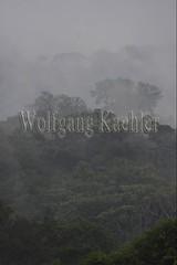60071625 (wolfgangkaehler) Tags: 2016 southamerica southamerican ecuador ecuadorian latinamerica latinamerican rionapo rionapoecuador rionaporiver rainforest coca cocaecuador laselvalodge observationtower trees rainforestcanopy mist rising landscape scenery scenic