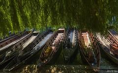 Pier with willow tree - I (KF-Photo) Tags: 1610 anlegestelle baum boote neckar neckarufer stocherkahn tbingen weide