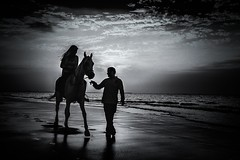 the arabian horse portrait (sonofphotography) Tags: thearabianhorseportrait beauty portrait street landscape photoart bw amazing wonderful girl woman tsphotoart sonofphotography happiness harmony horse beach sea cloud