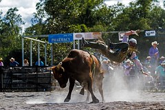 Off! (Sterling67) Tags: stroud rodeo 2016 cowboy cowgirl dirt dust horse bull challenge courage outdoor