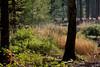 ckuchem-8349 (christine_kuchem) Tags: baum baumstämme bäume einschlag fichten holzwirtschaft wald waldwirtschaft