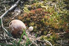 still (iluminadora) Tags: naturaleza musgo verde green primavera nature spiral moss spring md shell snail maryland acorn concha espiral stillness caracol silencio bellota iluminadora