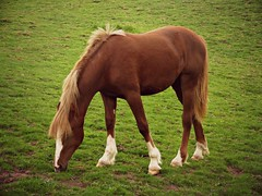 Horse in the Wind (Dave Roberts3) Tags: wales glamorgan merthyr tydfil citrit picmonkey