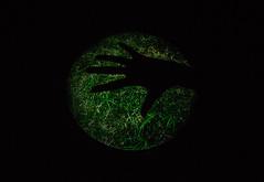 Palm de terre (Beau Finley) Tags: art grass silhouette gallery pittsburgh projection emerald mattressfactory beaufinley dannybracken isalways