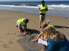 ESRM sandy beach monitoring El Capitan State Beach 05-20-15a