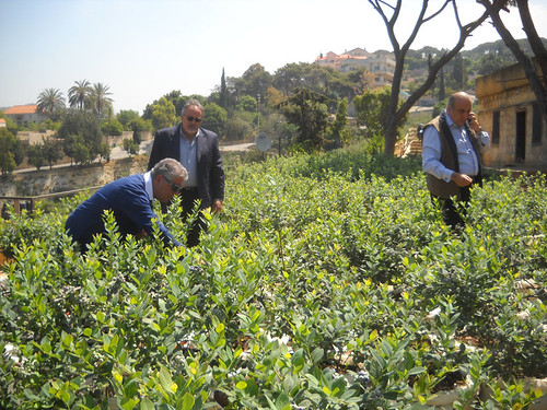 Minister Fady Abboud & Hon. Nadim Ghossoub picking Beerries in Deirkoubel a May 6, 2015
