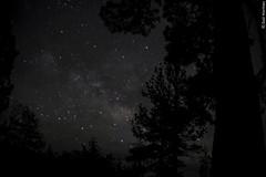 Noches en San Pedro Mrtir (Sal Martnez // Photojournalist) Tags: california sky naturaleza nature forest dark de mexico star woods san sierra pedro bosque unam astronomy baja instituto martir astronoma