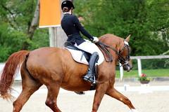 IMG_0887 (dreiwn) Tags: horse pony pferde pferd equestrian horseback reiten horseriding dressage hnger 2015 reitturnier dressur pferdekopf dressuur junioren ridingarena pferdesport doublebridle reitplatz reitverein pferdehnger kandare turnierreiten dressurprfung ldressur