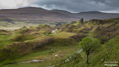 The Fairy Glen, Isle of Skye (Rory Marland) Tags: trees light skye composition sunrise canon landscape scotland isleofskye wind hill north may glen hills fairy mysterious winding isle f8 uig shaft 6d 2470mm fairyglen