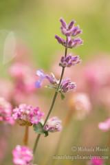 2016_05_27_Natur Kloster Oberzell-32 (mimesfotografie) Tags: natur blumen blte blhen lichtundschatten unterfranken klosteroberzell blumenvielfalt naturfarbenpracht