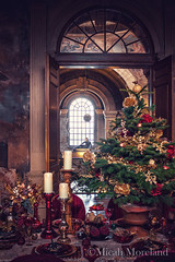 A Stately Christmas (micahmoreland) Tags: xmas old uk winter england house holiday cold tree castle english home stone architecture furniture interior yorkshire decoration ceiling gift dining british mansion stately castlehoward