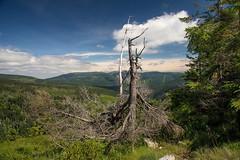 Riesengebirge bei Horn Mseky (franzmarkus) Tags: riesengebirge tschechien fx felsen forest d600 nikon nikkor