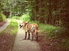 2016-07-24_16-19-14 (torstenbehrens) Tags: hund wald modder schlamm moor olympus ep5 sigma 60mm f28 dn digital camera