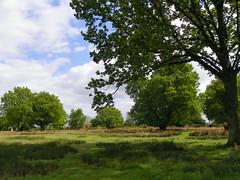 GOC The Pelhams 082: Patmore Heath Nature Reserve, Albury (Peter O'Connor aka anemoneprojectors) Tags: england plant tree field landscape kodak outdoor heath scrub hertfordshire albury 2016 patmoreheath scrubland goc gayoutdoorclub z981 kodakeasysharez981 gochertfordshire hertfordshiregoc gocthepelhams patmoreheathnaturereserve