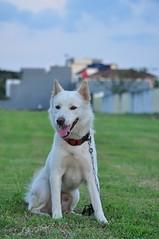 Hey..??! My name is Kei.. (hamidnoer) Tags: bali dog pet animal nikon kintamani