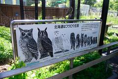 2016 北海道D6 4x6 3232 (chaochun777) Tags: 北海道 旭山 動物園 露營 自由行 猴子 長臂猿 猩猩 雲豹 花豹 老虎 獅子 北極熊 企鵝