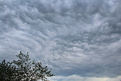 Ripples (Venvierra @ GothZILLA Photography) Tags: trees sky weather clouds canon dark eos cloudy brooding canoneos 600d broodingskies canon600d canoneos600d gothzillaphotography