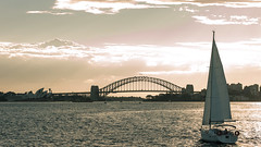 Into the sunset (seenbyalex) Tags: alexanderschulz australia australien boat clouds coffee harbourbridge ocean pacific photos sailboat sea seenbyalex sky sunset sydney sydneyopera travel