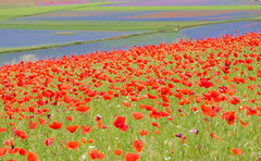 Colors.... (Lupogrande25) Tags: colors flowers castellucciodinorcia umbria italy stripes ngc